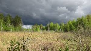 Выкуп земель сельхозназначения