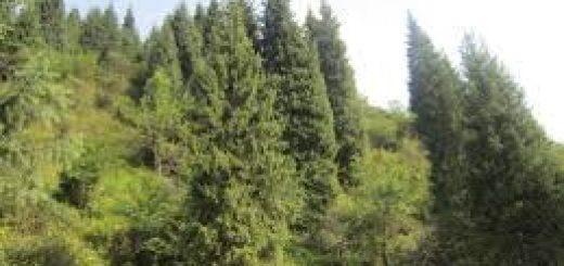 Оценка лесного фонда