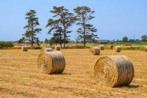 Оценка стоимости сельскохозяйственных земель