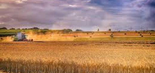 Оценка земли сельхозназначения