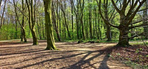 Оценка лесных земель