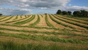 Оценка земель сельскохозяйственного назначения
