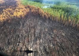 Качественная оценка лесных земель