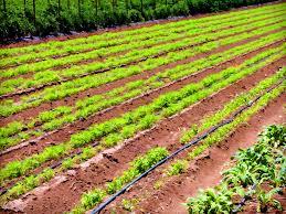 Качественная оценка земли сельхозназначения