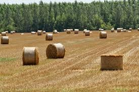 Профессиональная оценка сельскохозяйственных земель